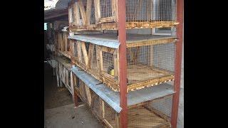 getlinkyoutube.com-Клетка для кроликов своими руками!!! Часть 4-я!!! Финальная сборка!!!Rabbit-hutch.