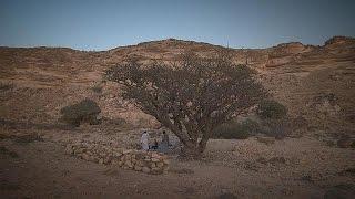 getlinkyoutube.com-زندگی در عمان؛ عجایب و شگفتیهای طبیعی - life