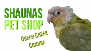 getlinkyoutube.com-Shaunas Pet Shop: Green Cheek Conure
