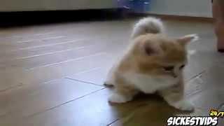 getlinkyoutube.com-لقطات مضحكة للقطط