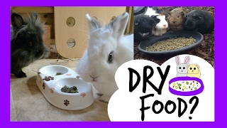 getlinkyoutube.com-Dry Food For Rabbits & Guinea Pigs | Pets Palace Kids | Episode. 3