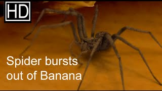 getlinkyoutube.com-Spider bursts out of a Banana