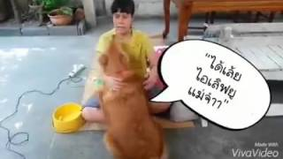 getlinkyoutube.com-น้องหมาแสนรู้ซื้อลูกชินเอง!!!