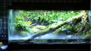 getlinkyoutube.com-Vivarium frog tank. View at your own risk.