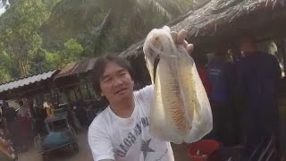getlinkyoutube.com-ยังไม่ตาย หมึกหอมตัวใหญ่ สะใจ.. หมึกกระดอง ไข่หมึก สดๆ จากทะเล Squid