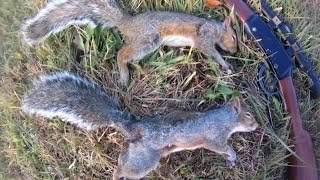 getlinkyoutube.com-Small Game Hunting #38: 2 Gray Squirrels by .22 Rifle