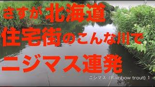 getlinkyoutube.com-【金楽勺】北海道ニジマス釣り20連発!(大物は8:00〜)室蘭ルアーフィッシィング,虹鱒rai