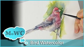 getlinkyoutube.com-Bird Painting With Wet in Wet Watercolor Underpainting Technique