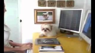 getlinkyoutube.com-The Real Puppoose
