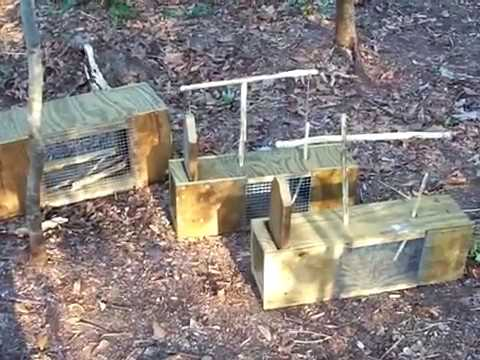 Wooden Homemade Box Trap Part 1
