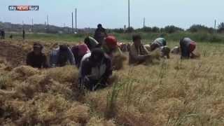 getlinkyoutube.com-سوريا.. حصاد القمح مهمة المخاطر