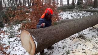 getlinkyoutube.com-Felling chainsaw Husqvarna 357 XP