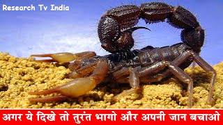 दुनिया के सबसे जहरीले बिच्छू| Most Poisonous and Dangerous Scorpion in the World|Scorpions|Rahasya width=