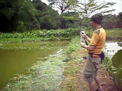 Mancing Ikan Bawal di SSB Pelita Jaya Sawangan part 7