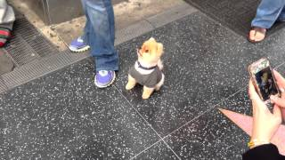 getlinkyoutube.com-A Dog that does Tricks in Hollywood!