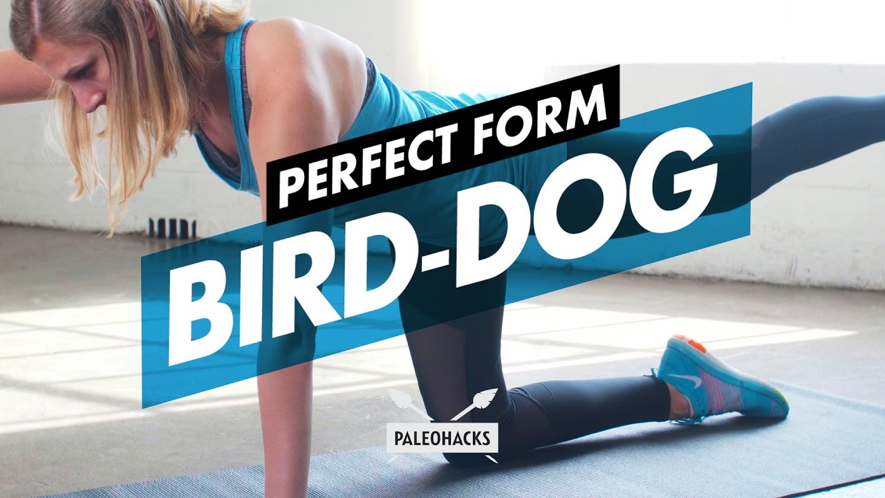 2. Bird - Dog Exercise Variations