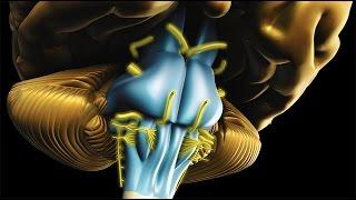 getlinkyoutube.com-Neuroanatomy - The Brainstem