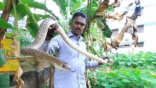 getlinkyoutube.com-Vava Suresh Rescuing a Common Krait & Two Big Rat Snakes | SNAKE MASTER Ep 193 | Kaumudy TV