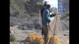getlinkyoutube.com-Silvestrismo Diana- Capturas al paso-Años 90