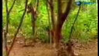 getlinkyoutube.com-Funny monkey