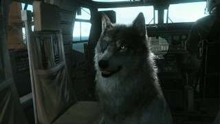 getlinkyoutube.com-Metal Gear  Solid 5 - Buddy Guide: D-Dog