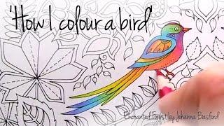 getlinkyoutube.com-How I colour a bird (blending colours); Enchanted Forest - Johanna Basford