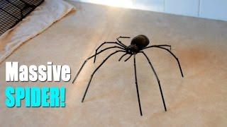 getlinkyoutube.com-BIGGEST SPIDER EVER?!