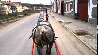getlinkyoutube.com-caii ghiuri rupea