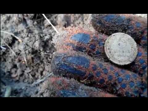 Поиск с металоискателем в лесу