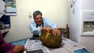 getlinkyoutube.com-Yaca Fruta mexicana