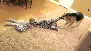 getlinkyoutube.com-Dog vs Baby!