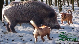 getlinkyoutube.com-Wild Boar Hunting in Croatia, Kalnik 2016 part 4, Kroatische Keiler 4 - Kalnik 2016. Drückjagd