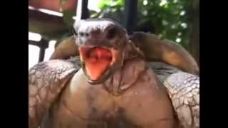 getlinkyoutube.com-Extreme Animals Making Hilarious Funny Noises