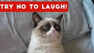 getlinkyoutube.com-Try Not To Laugh At This Funny Cat Video Compilation | Funny Pet Videos