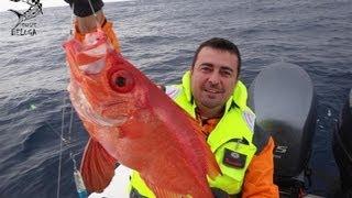 getlinkyoutube.com-Pescaria em alto mar de LÍRIO, OLHO DE CÃO e NAMORADO - Equipe Beluga Rato&Cia