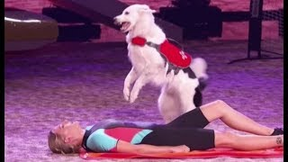 Sara & Hero: An EPIC Rescue Dog Act....Then The Dogs Go Off-Script   America's Got Talent 2017