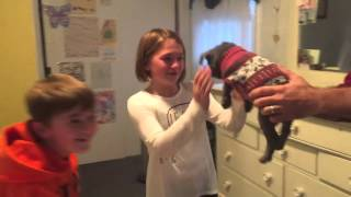 getlinkyoutube.com-Christmas Surprise Blue French Bulldog Reveal Girl Cries