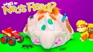 getlinkyoutube.com-NED'S HEAD Surprise Game Paw Patrol + Blaze Play Ned's Head Surprise Egg Video Toys Unboxing