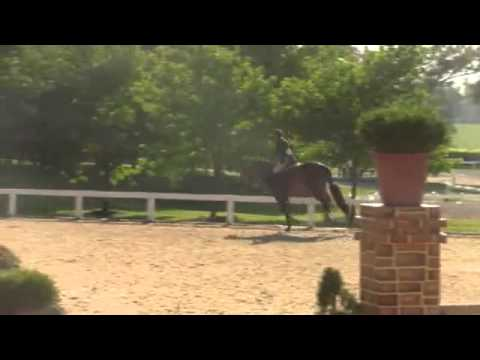 Video of BALIN ridden by HAVENS SCHATT from ShowNet!