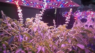 getlinkyoutube.com-400 Watt LED Grow Light From Magiove Growing Hydroponic Basil And Lettuce