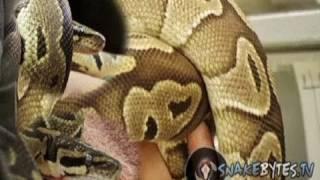 Snake Bytes TV - Snake Massage : SnakeBytesTV