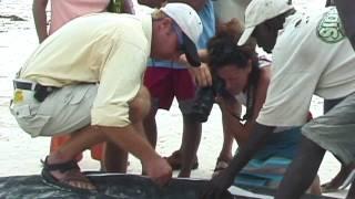Papa Shillingi, a whale shark documentary.
