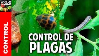 Cómo controlar las plagas del huerto - el video mas completo que hay en youtube @cosasdeljardin
