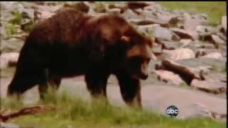 getlinkyoutube.com-!!BEAR ATTACKS 3 CAMPERS KILLING ONE!!