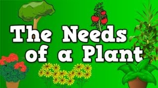 getlinkyoutube.com-The Needs of a Plant (song for kids about 5 things plants need to live)