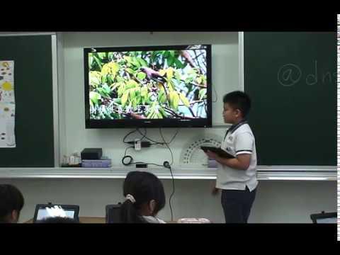 探索樹鵲 - YouTube