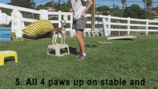 getlinkyoutube.com-Puppy Agility Foundation Part 1.mpg
