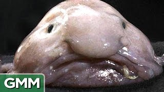 getlinkyoutube.com-Top 5 Ugliest Animals - RANKED
