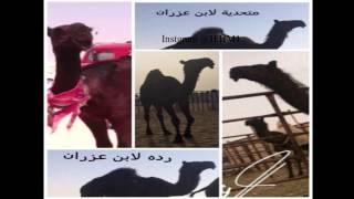 getlinkyoutube.com-شيله العزران  كلمات صالح الدرعه اداء حمد و ناصر الطويل