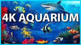 The Best 4K Aquarium for Relaxation 🐠 Sleep Relax Meditation Music - 2 hours - 4K UHD Screensaver